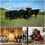 Aberdeen Angus and Absinthe tour